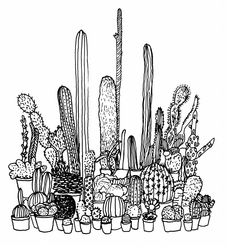 Cacti, A Congregation of Wits